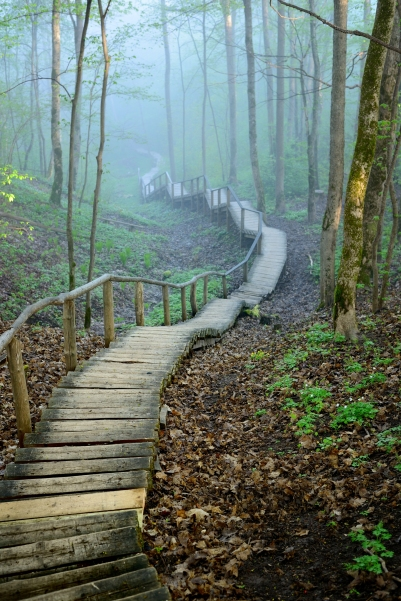 Wooden footpath stairway in mystical deciduous forest disappeari