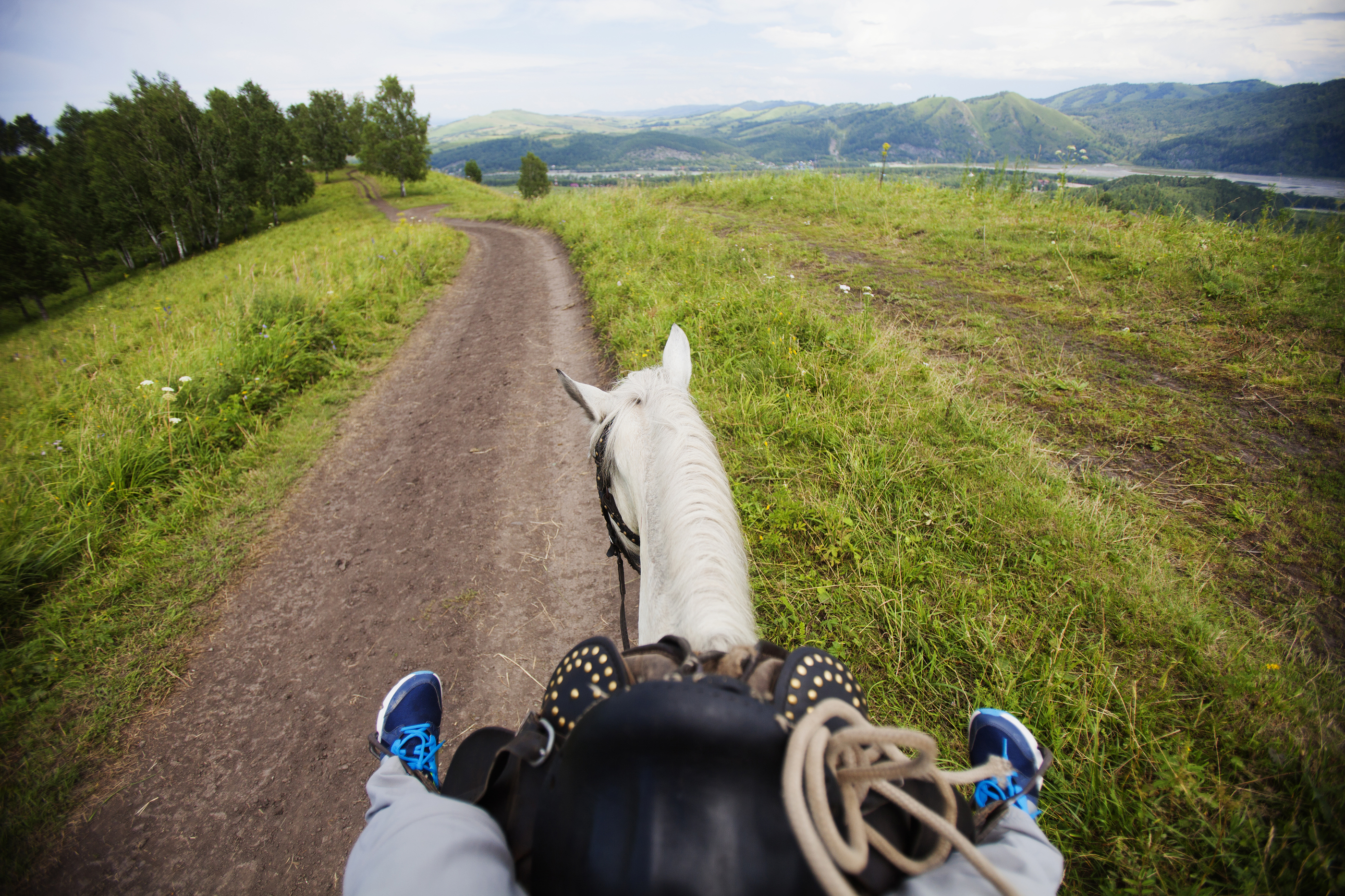 Riding a horse on a rural road. View from the horse