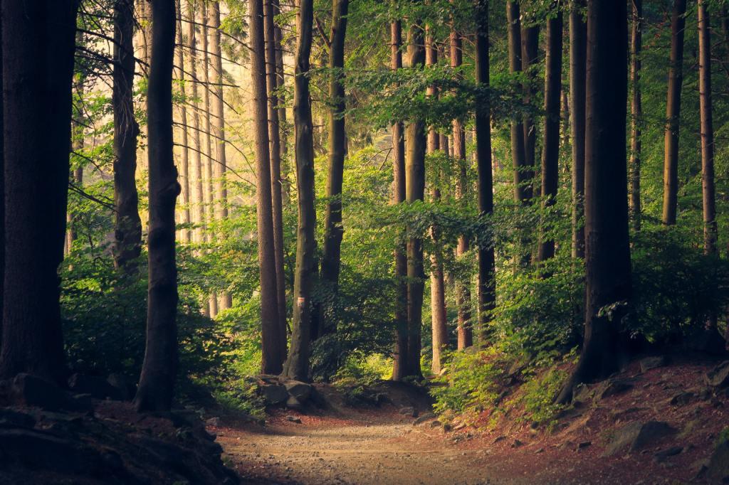Forest scene; Photo by Lukasz Szmigiel on Unsplash
